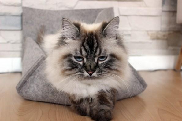 Stylecats-Groovie-Katzenbett-Simba_no-photos