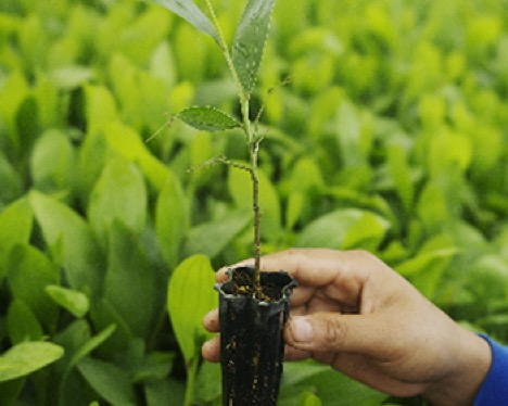 Enviromental Stewardship Plant