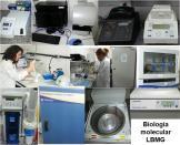 LBMG - infraestrutura - biologia molecular