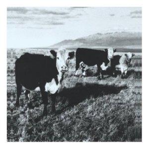 Mark Kozelek - The Finally LP (2008)