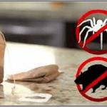 A rovarok és az egerek ellen a teafilter a megoldást nyújthat