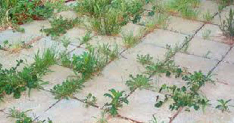 9 mód, hogy sose nőjön több gyom a kertedben! Zseniális!