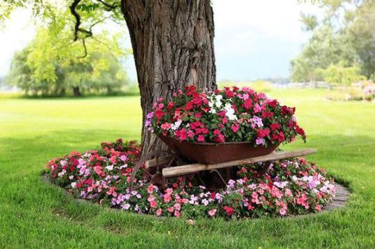 viragok-amelyek-szeretik-az-arnyekot13