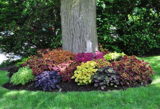 viragok-amelyek-szeretik-az-arnyekot6