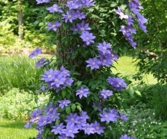 viragok-amelyek-szeretik-az-arnyekot7-540x450