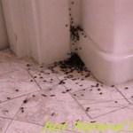 Így tüntesd el az összes hangyát a házadból talán örökre, ezzel a filléres keverékkel