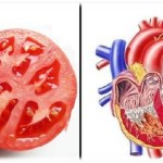 11 élelmiszer, amely ajándék az embernek – Ezek az élelmiszerek szervekre hasonlítanak, nézd a hatásukat