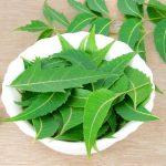 A legteljesebb lista a gyógynövények préselt leveleinek gyógyhatásáról az articsókától a zsurlóig