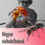 Hogyan szabadulhatunk meg a házban élő hangyáktól?