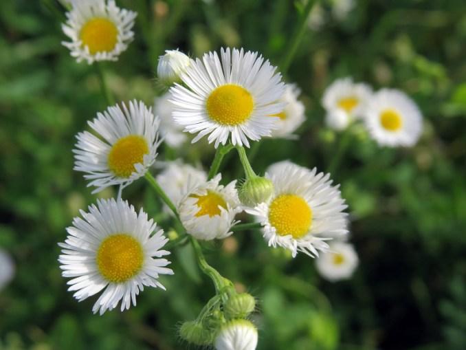 cvjetoviutravi