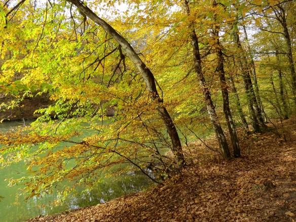 jesenjezero