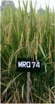 padi-mrq-74