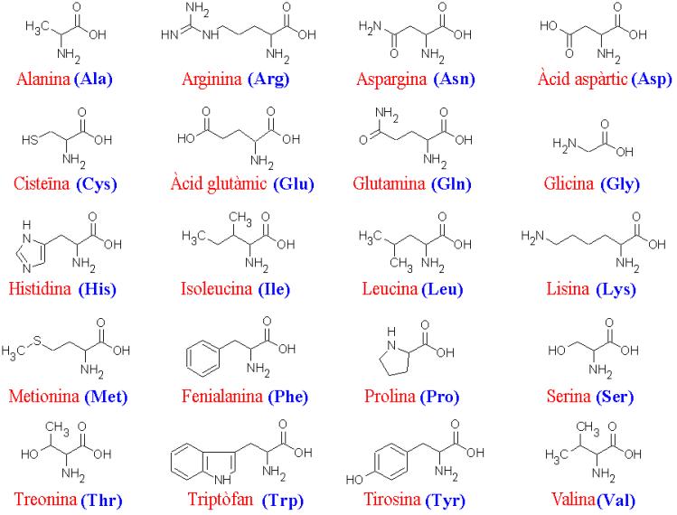 Aminoácidos escenciales y no escenciales