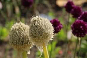 Botanischer Garten Juni 13