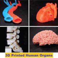 3D-printed-human-organs-3d-printed-organs-3d-printing-body-parts