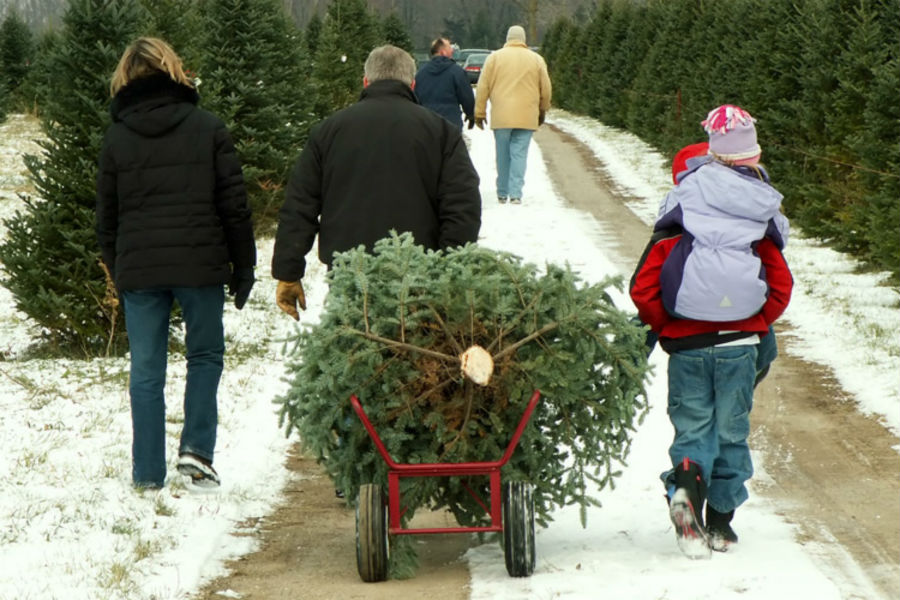 Picking out a Christmas tree