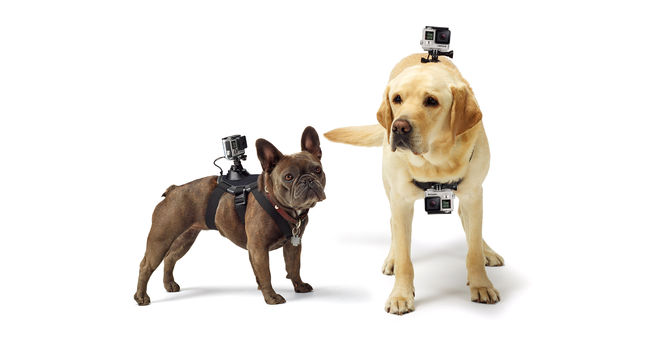 GoPro Action Camera Bundle for Dogs