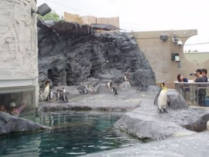 Асахикава Зоопарк Пингвины