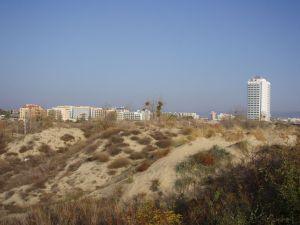 Солнечный берег. Дюны.
