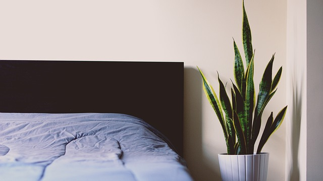 a green leaved plant beside the bed