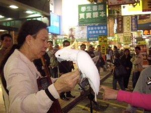 parrot man Hong Kong