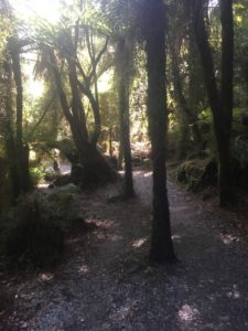 trees on the walkway at hokitika gorge