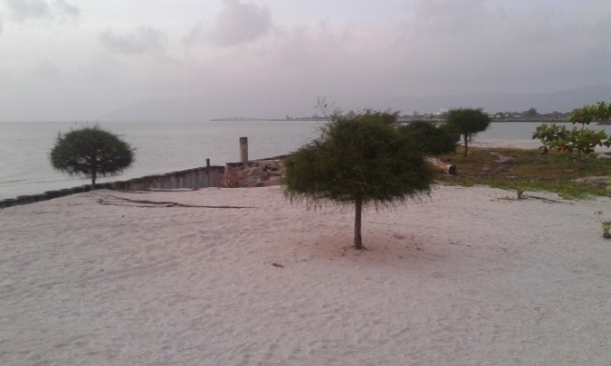 small trees at the beach