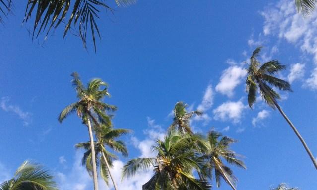 Palms Sky