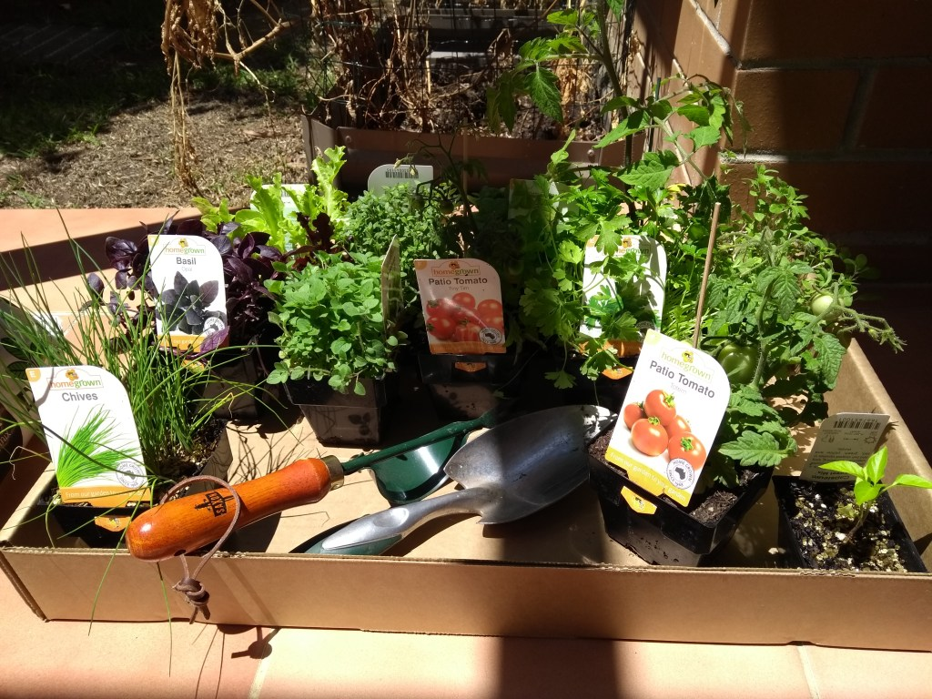 Herbs for Vegetable Garden