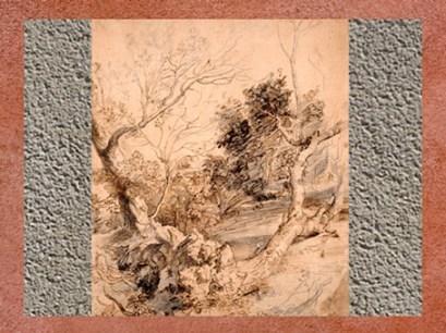 D'après une étude d'arbres, Pierre Paul Rubens, XVIIe siècle. (Marsailly/Blogostelle)