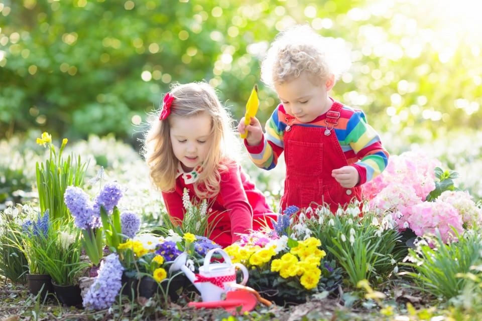 Welke bloembollen komen als eerste uit in de lente