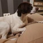 Een nieuw hondenkussen: da's even wennen!