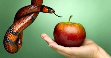 pecado - 7 Pecados Profissionais   Veja a lista do que não fazer no ambiente de trabalho