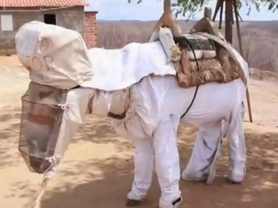 巴西養蜂驢