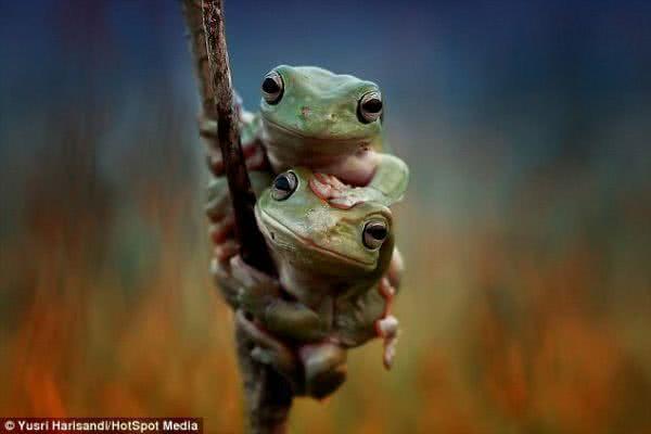 青蛙鏡頭前手牽手