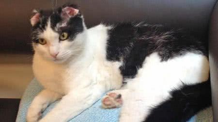 貓咪大難不死,但兩隻耳朵都已被燒掉了一半