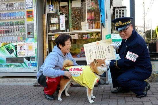 柴犬幫主人看店賣香菸