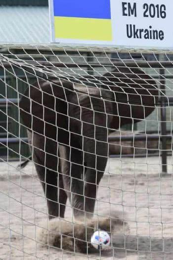 大象踢足球
