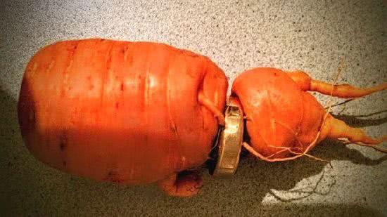 結婚戒指長在胡蘿蔔上