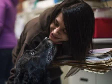 走失10年後被尋獲的黑色拉布拉多混血犬