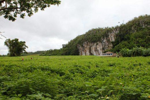 Vinales Valley Cuba, farmers