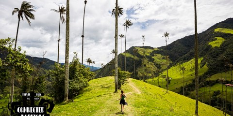 Complete Guide to Hike Valle de Cocora