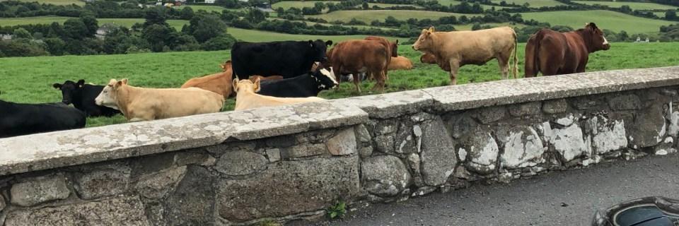 Roadtripping in Ireland