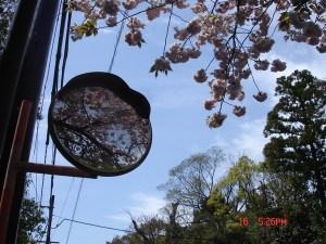 avril-au-japon-5198