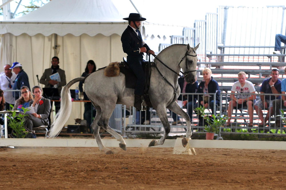 cavalli-a-roma-2
