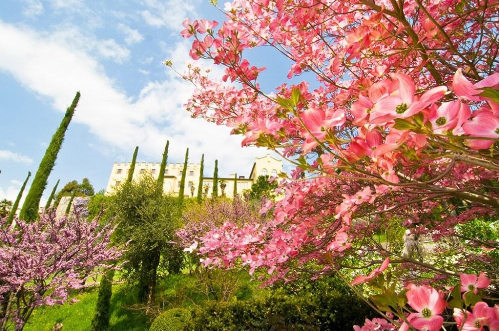 Trauttmansdorff_-_Le_fioriture_in_primavera_5-1024x680.jpg