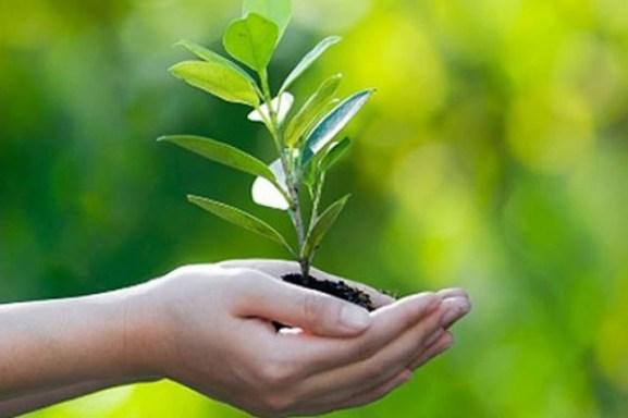 cura-delle-piante