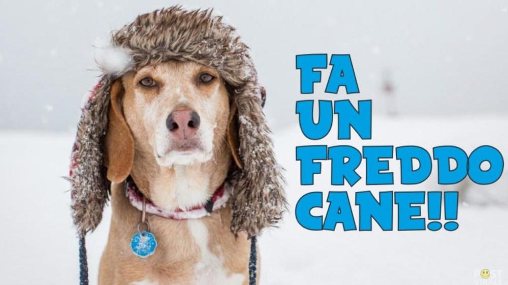 Fa-un-freddo-cane-1024x574.jpg