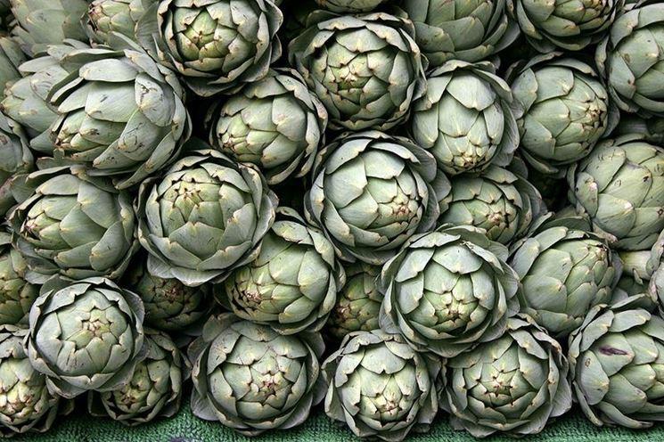 coltivare-carciofi_NG2.jpg