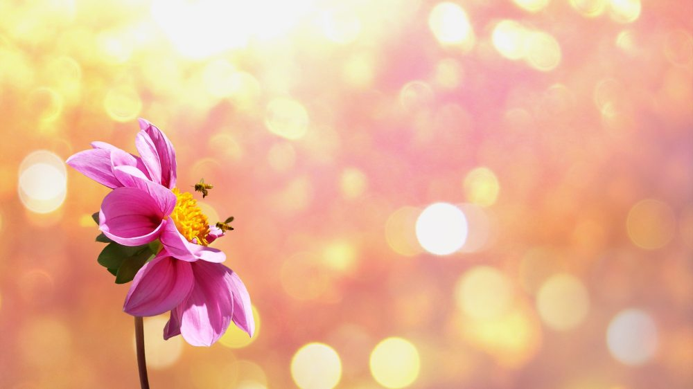 bees-bloom-blossom-266645